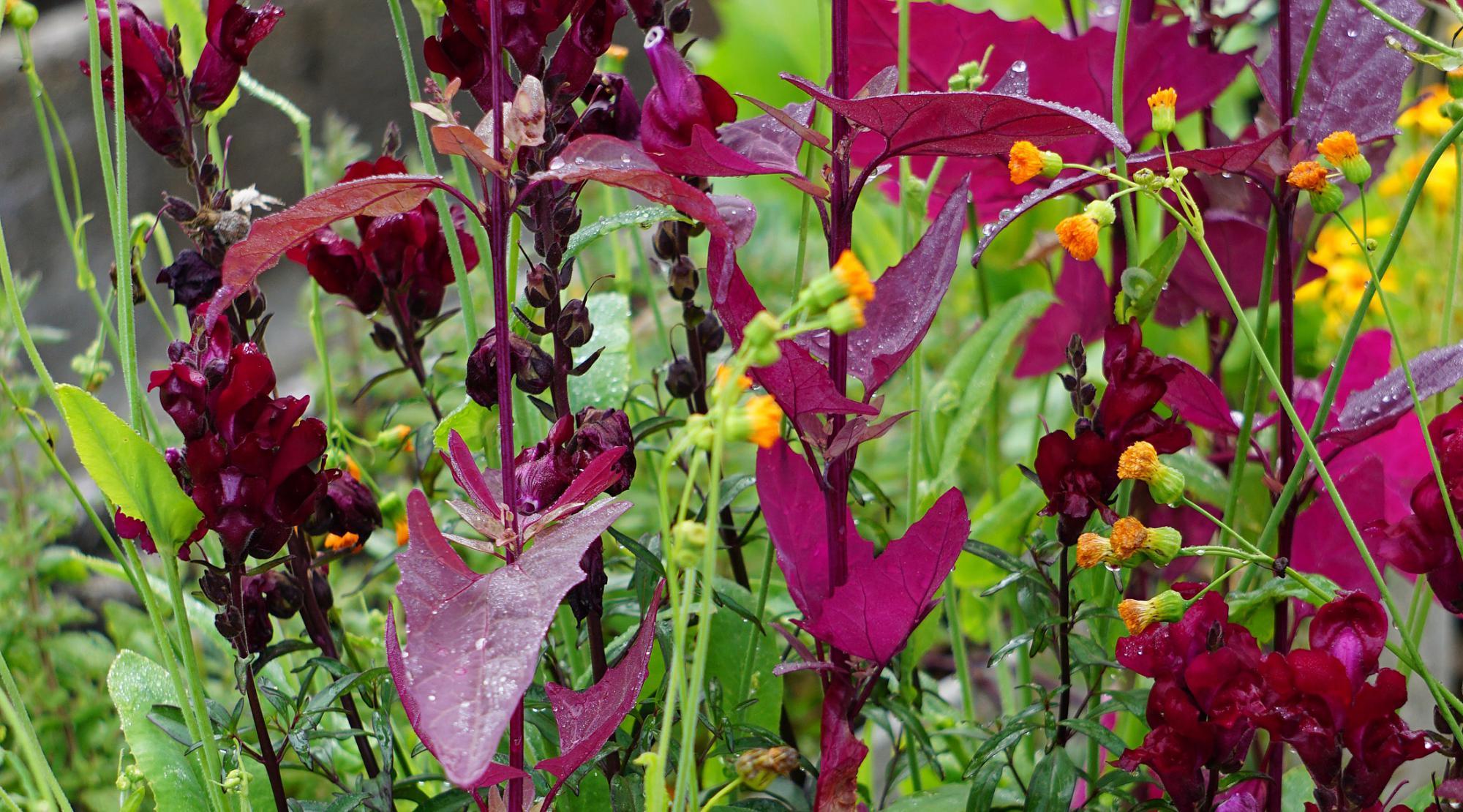 Forschungsprojekt – Gemüseanbau in Pflanzgefässen