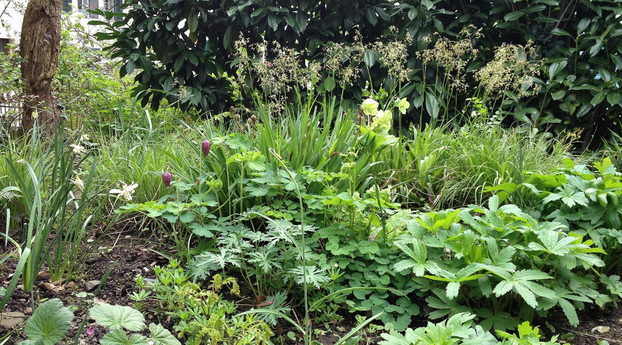 Unter einem Nussbaum – Ein kleiner Schattengarten